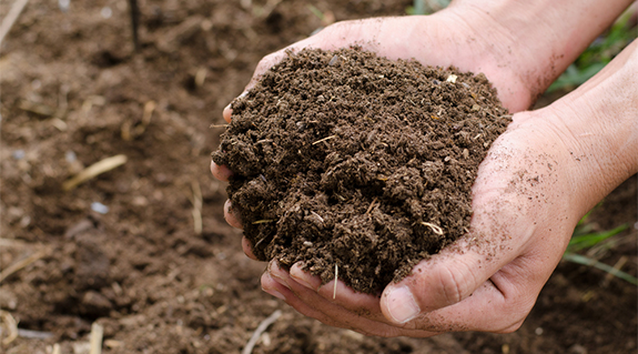 Dillo Dirt in hands